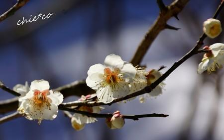 雪彩の北鎌倉-063