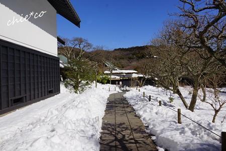 雪彩の北鎌倉-133