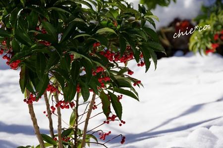 雪彩の北鎌倉-177