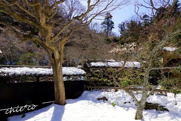 雪彩の北鎌倉-167
