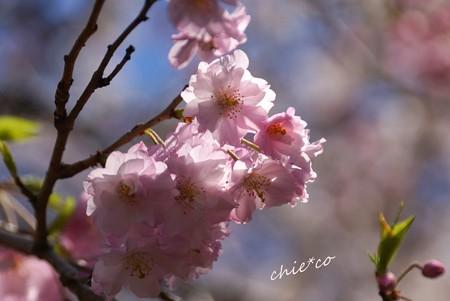 三渓園~春~-154