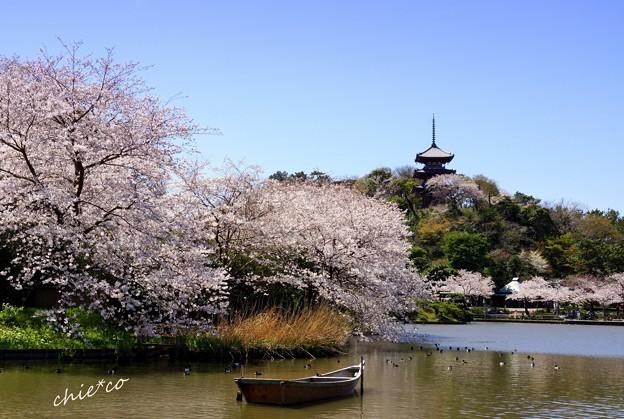 桜と・・舟と・・三重塔と・・