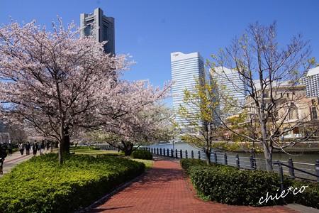 みなとみらい桜景色-079