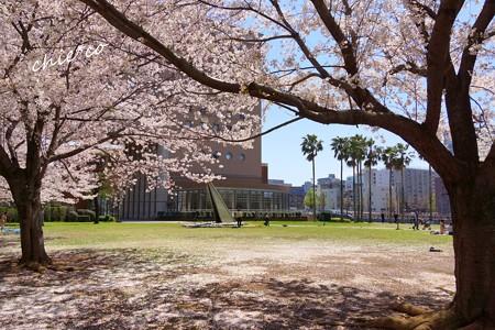 みなとみらい桜景色-085