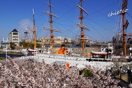 桜海に浮かぶ日本丸・・