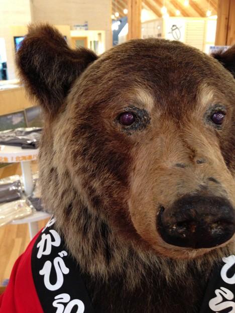 ひがし大雪自然館のクマ
