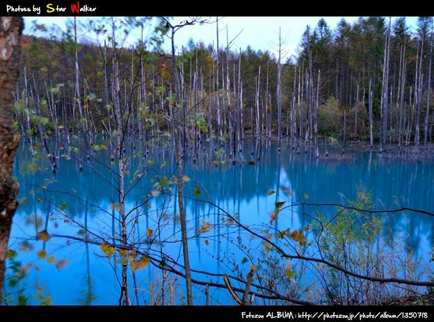 白金 青い池2