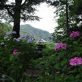 Photos: 梅雨時の信貴山朝護孫子寺(ちょうごそんしじ)