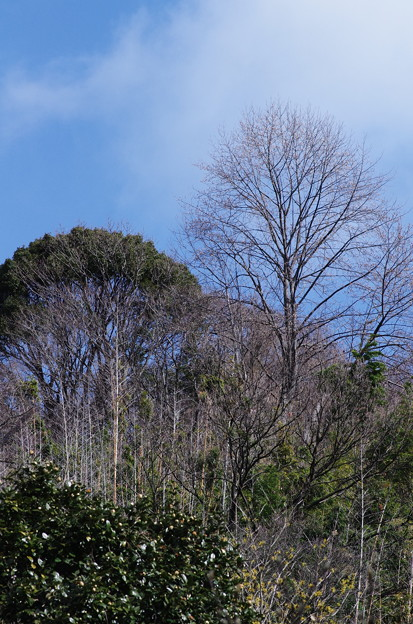 枯木も山の賑わい