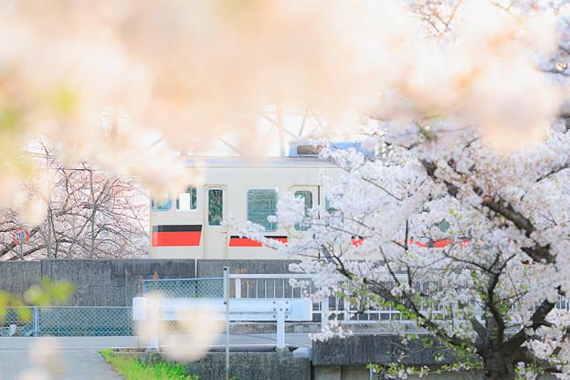 桜の日のこと