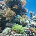 aquarium(1)