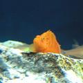 aquarium(2)