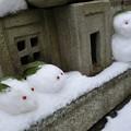 Photos: 雪の日の住人たち