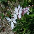 里山で見かけた花