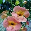 夏の花 ?