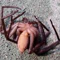 Photos: 落とされた蜘蛛