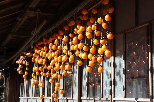 干したばかりの吊るし柿