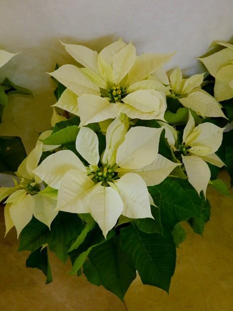 中華街の花