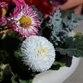 鉢植えの花も