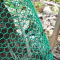 Photos: ニホンミツバチの巣