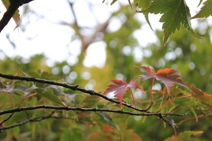 えびの高原の紅葉