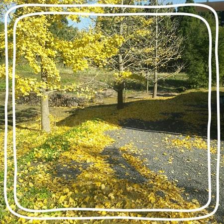 黄色い絨毯みたい