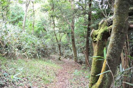 モビの展望台へ向かう登山道
