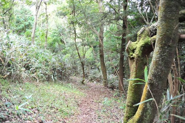 写真: モビの展望台へ向かう登山道