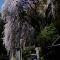 Photos: お散歩花見