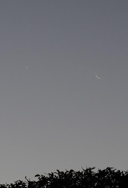 早朝の月と金星
