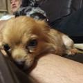 Photos: 足を枕にする龍ちゃん
