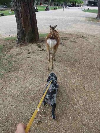 鹿の後を付いて歩く春馬