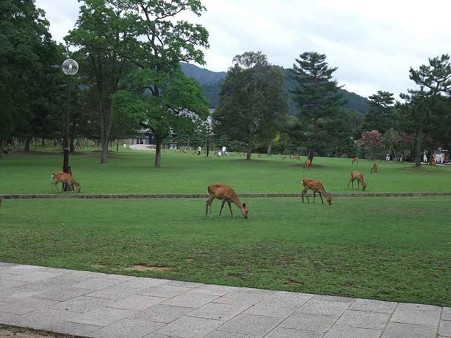 鹿いっぱいだぞ~~