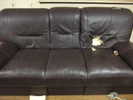 右側のソファー