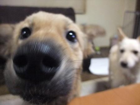 絢の鼻デカ(この2頭、カメラには興味津々♪)