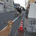 Photos: ラソ、バイバイ~~!!