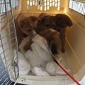 Photos: 近寄ってきた子犬達に・・・
