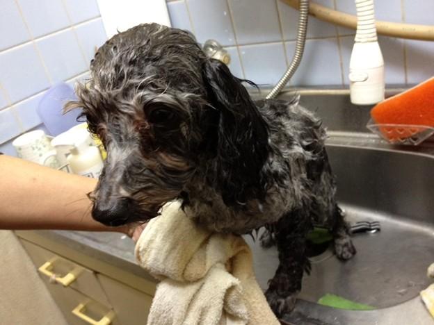 Photos: 新しい保護犬です