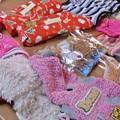 Photos: 小型犬用服とオヤツと私へのクリスマスプレゼント