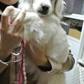 Photos: コスモ お帰り~