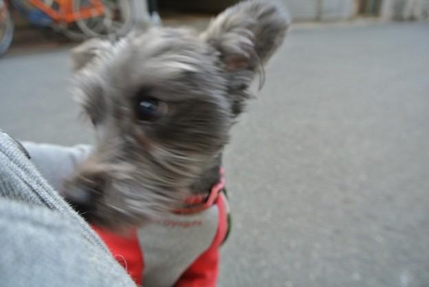 Photos: 犬も人も大好きで