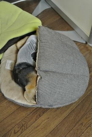 正しいベッドの使い方(◎)