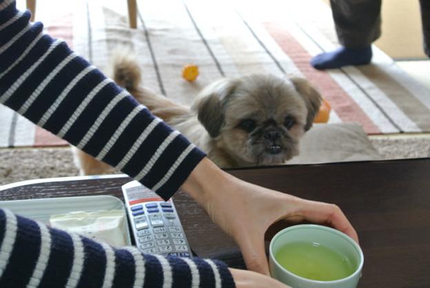 Photos: バロン君、それは私のお茶ですよ