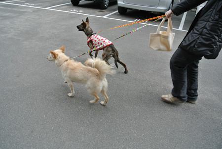 散歩に行くよ~!