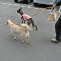 Photos: 散歩に行くよ~!
