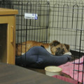Photos: サークルで寝たり