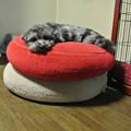 Photos: 2段重ねベッド♪