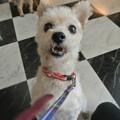 Photos: で、やっぱり何犬??