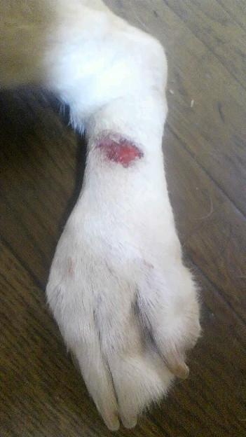 Photos: 床ずれ?だった所、血が出た…