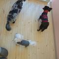 Photos: 春馬とで~看板犬してました(笑)